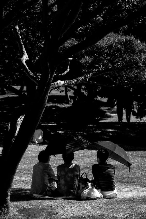 Women sitting in tree shade