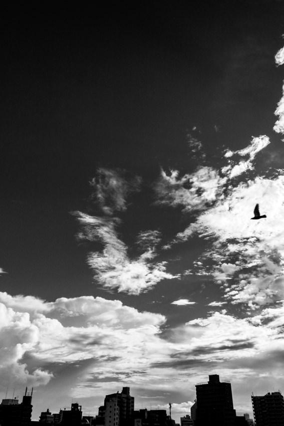 Bird flying among clouds