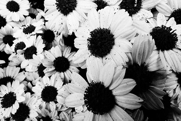Cluster Of Flowers @ Kanagawa