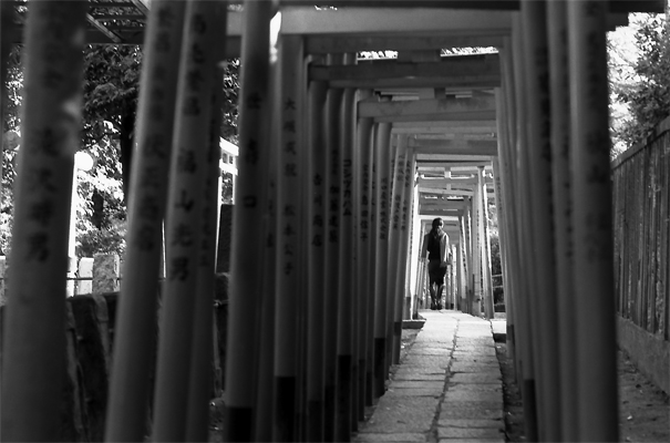 Woman Walking Through Shinto Gateways (Tokyo)