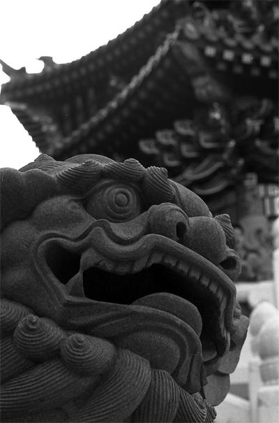 Guardian Dog In Chinese Temple @ Kanagawa