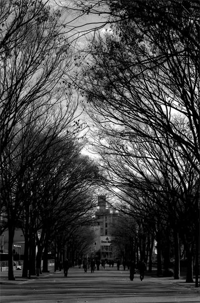 葉っぱの落ちた木々の下の道