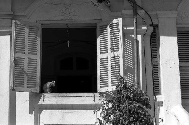 二階の窓辺の座っていた猫
