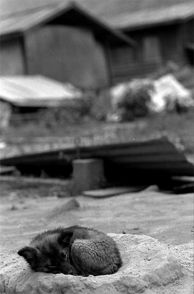道端の窪みにすっぽり入って寝る犬