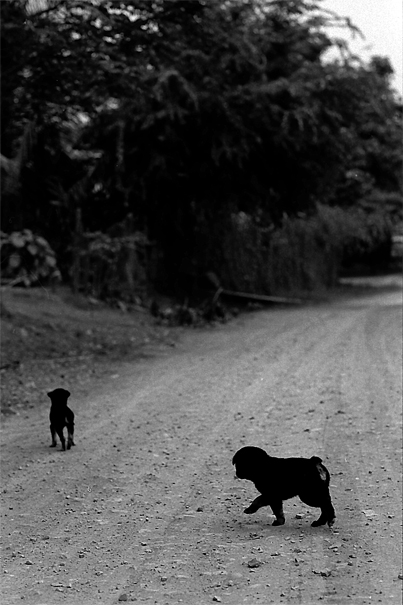 Dogs In The Graveled Road (Laos)