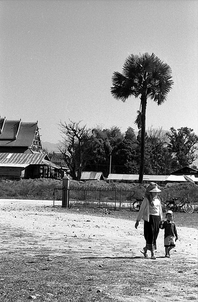 Palm Tree, Mother And Her Son (Laos)