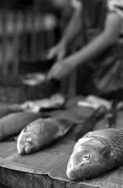 Fishes sold in morning market in Luang Prabang