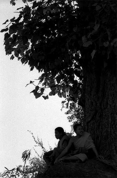 Buddhist monks relaxing under tall tree