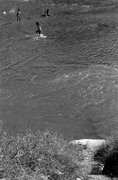 川で遊ぶ子どもたちのことを振り返って眺める猫