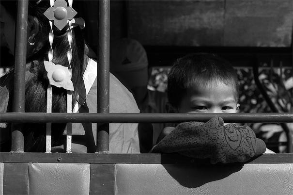 Eyes Of A Boy On A Jumbo (Laos)