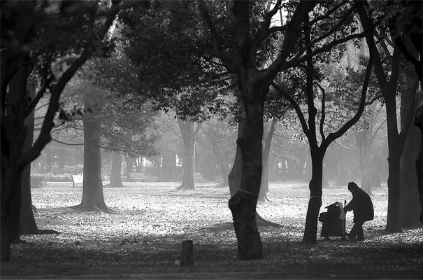 Man Standing In The Woods @ Tokyo