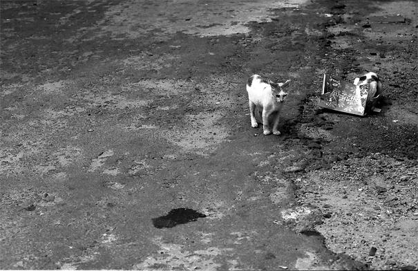 隠れる猫と露わになった猫