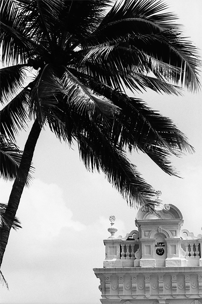 Palm Tree And The Kechimalai Mosque (Sri Lanka)