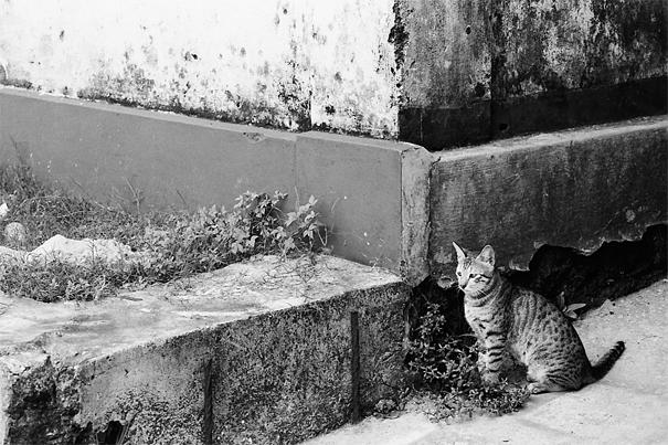 ぽつんと往来を眺める猫