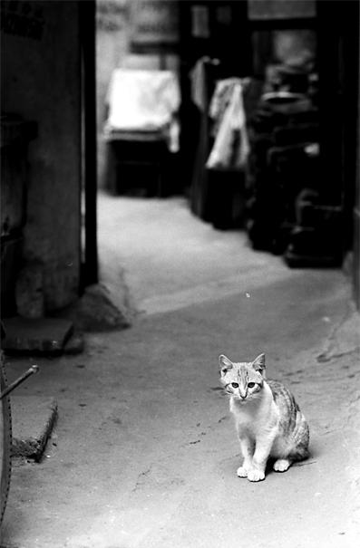 薄暗い路地に行儀よくお座りした猫