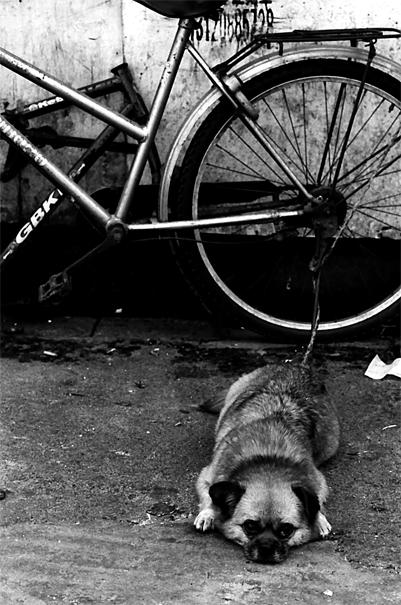 自転車の前で寝そべる犬