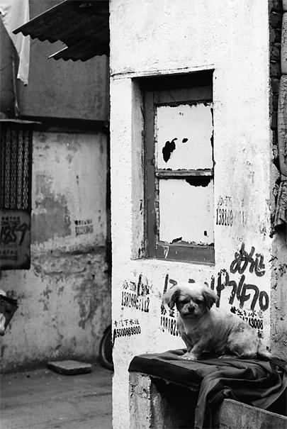 路地でポツンとお座りしていた犬