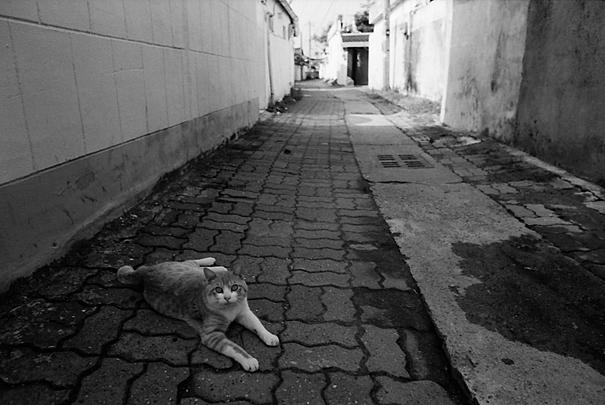 路地で寝転んでいた猫