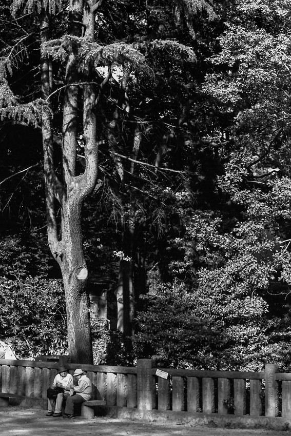 根津神社の境内で話し込む老婆