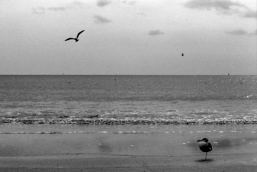 bird standing on one foot