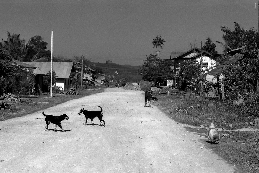 Dogs playing on dirt road