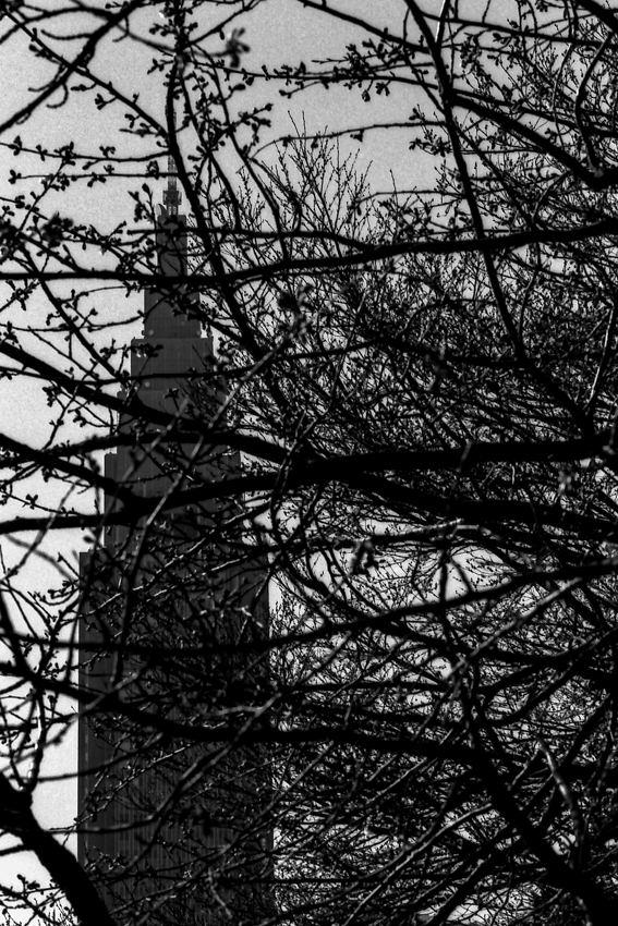 木の枝の向こうにそびえる高層ビル