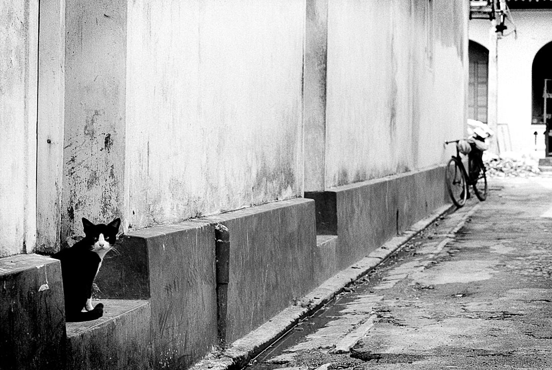 誰もいない路地で振り返る猫