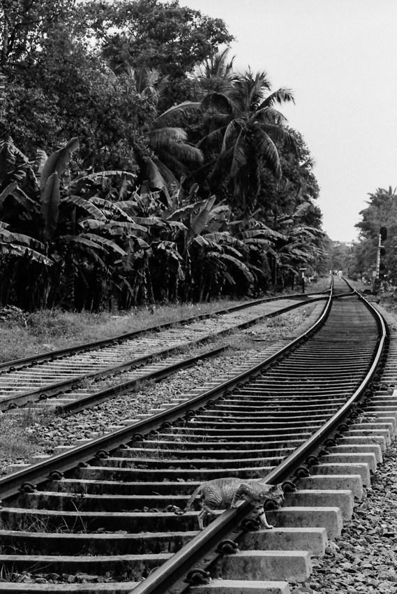 Cat crossing railway track