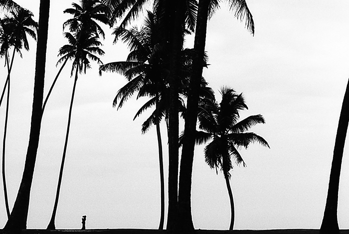 Small Silhouette Between Palm Trees (Sri Lanka)