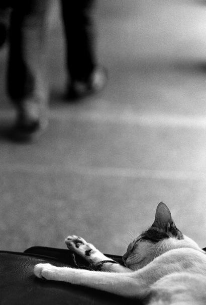 Cat Is Sleeping @ Philippines
