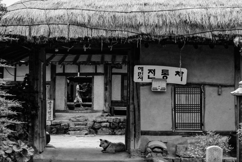 伝統的な家屋の門のところにお座りしていた犬