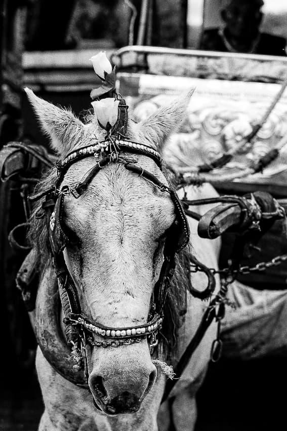 頭に一輪の花を載せた馬