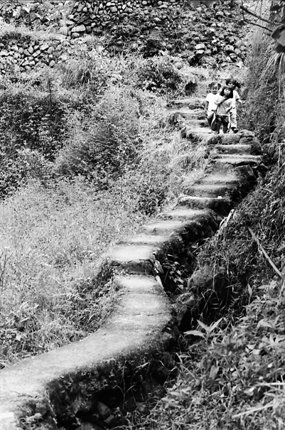 Kids on stairway in rice field