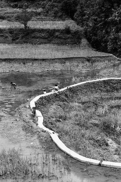 Winding path among rice paddies