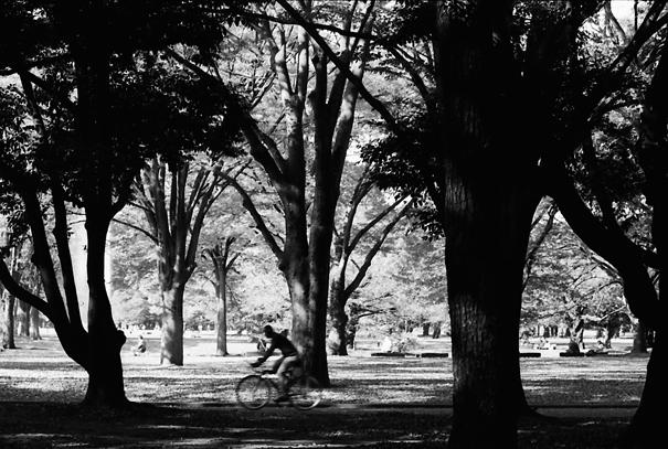 Bicycle running through woods