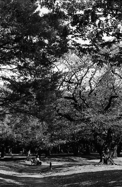 Trees In The Yoyogi Park (Tokyo)