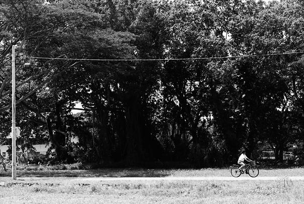 のんびりと田舎道を走る自転車