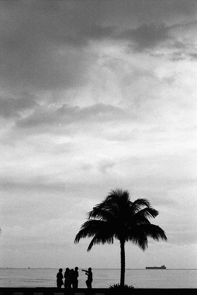 People Around The Palm Tree @ Malaysia