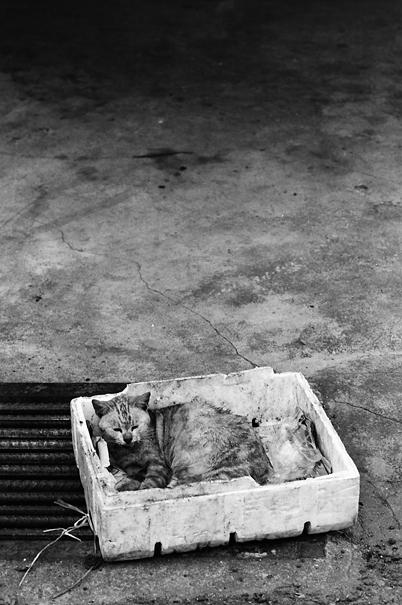 箱の中で丸まって寝る猫