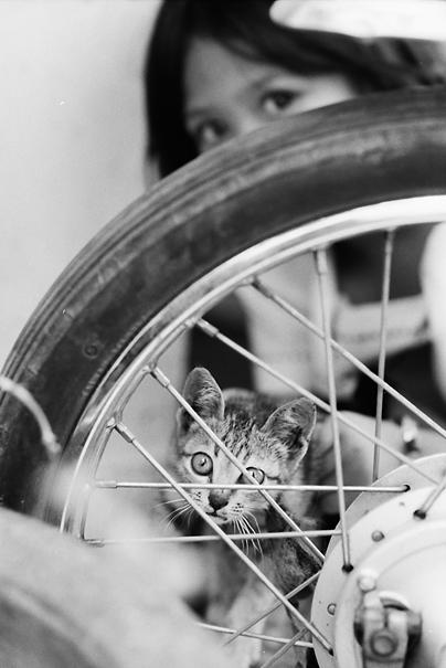 車輪越しに猫を見せる女の子