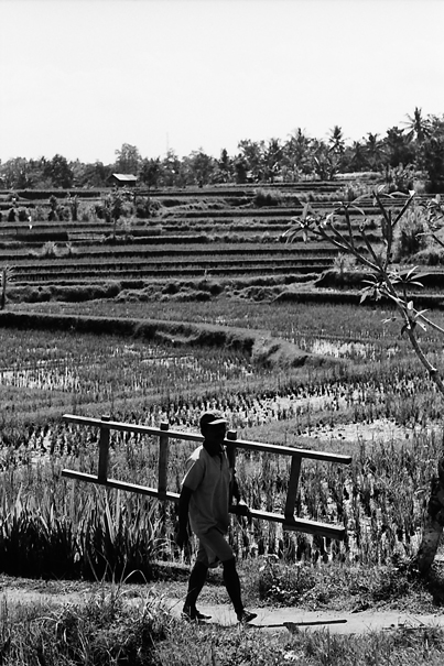 Ladder In The Field (Indonesia)
