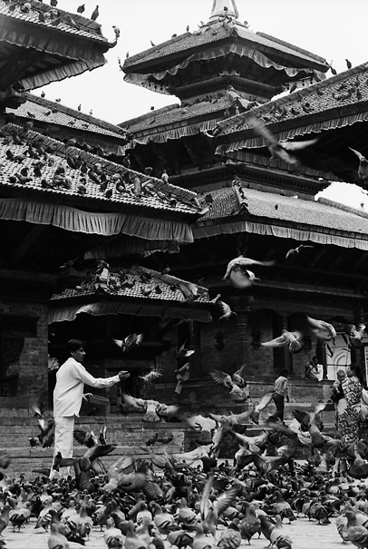 Doves In Durbar Square (Nepal)