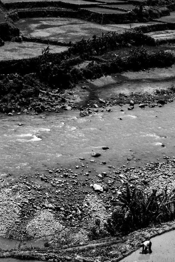 Rice paddies on riverbank
