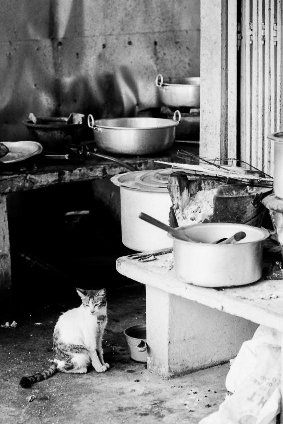 厨房にお座りする猫