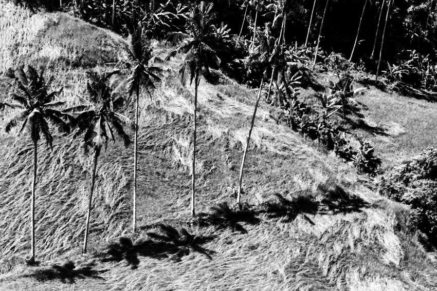 眼下に並んで立つ椰子の木