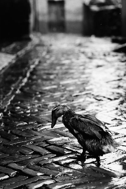 Bird After The Rain @ Nepal