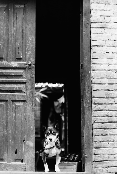 House Dog With A Regretting Look @ Nepal