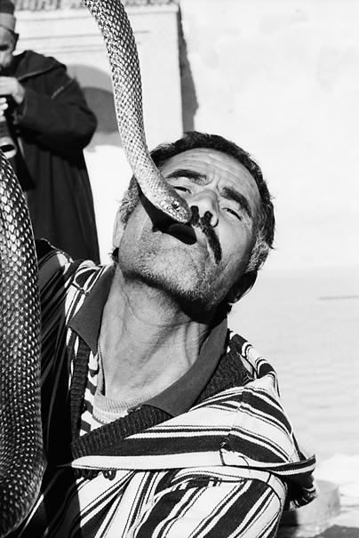 Man And Snake (Morocco)