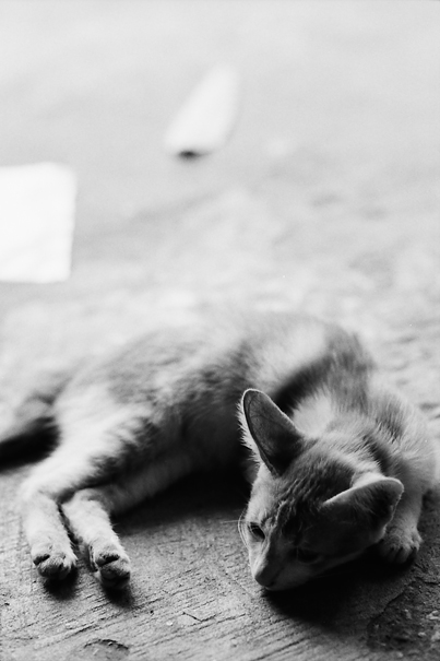 Cat @ Myanmar