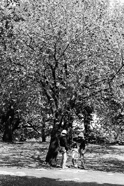 樹の下の家族連れ